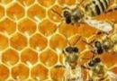 ENVI – Risoluzione per la salute delle api