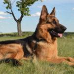 Possibile trasmissione umana agli animali di SARS CoV-2